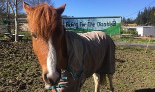 Volunteering at New Zealand riding for the disabled
