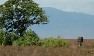 Amizade in Tanzania: A Safari Adventure Through the Serengeti