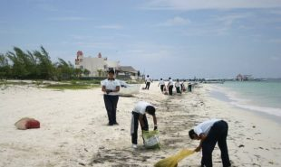 Coastal Conservation in Mexico