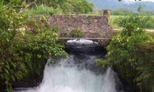 Roaring River Park in Petersfield, Jamaica